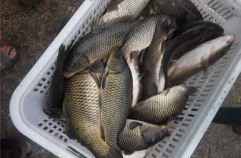 春季水库钓鲤鱼的饵料、钓位、钓具选用技巧