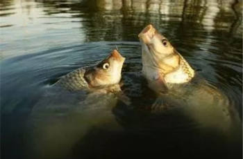 钓鲤鱼应当了解的三个小妙招
