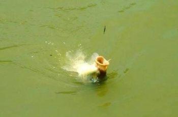 两种野钓鲤鱼调漂法,效果立竿见影