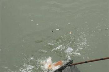 野钓如何钓到大鲤鱼?找准这两个地方
