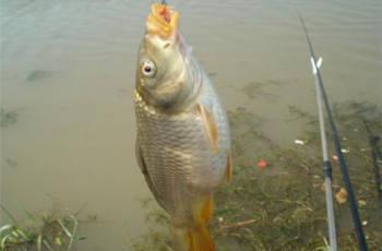 冬天水库如何钓鲤鱼?这些细节要注意