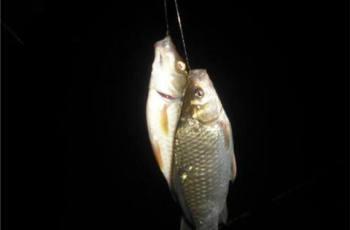 根据不同的目标鱼来选择钓位