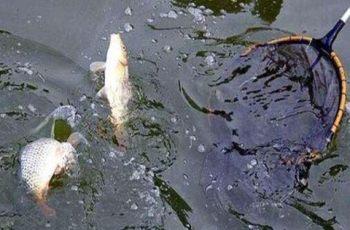冬季钓黑坑鲤鱼的4问4答