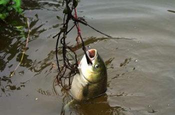 不同时段分层垂钓草鱼的技巧