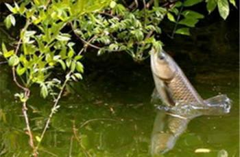 草鱼怎么钓?分享3个垂钓方法