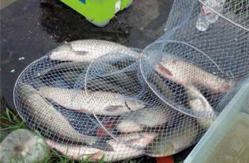 水库钓大草鱼的钓位选择技巧