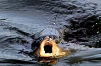 秋季钓草鱼,如何避免小鱼闹窝?