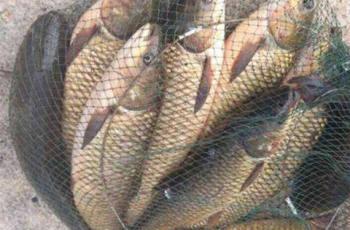 春钓草鱼的4个精髓技巧提醒
