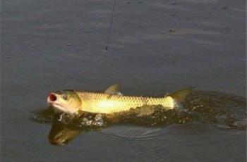 浮钓钓草鱼子线多长合适?为什么鱼线要长?