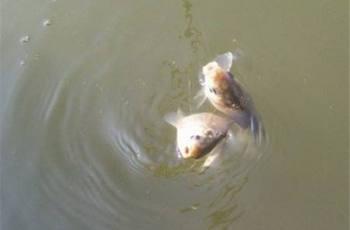 调漂要根据实际鱼情的变化来调整
