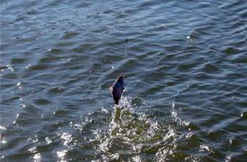 初春钓鱼,定点台钓不如传统走钓
