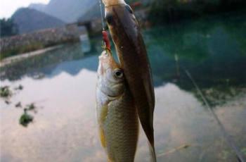 钓鲫鱼的常见钓法和饵料技巧