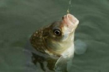 春季野钓鲫鱼的一些技巧详解