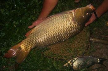 夏末秋初夜钓大鱼的技巧及用饵选择