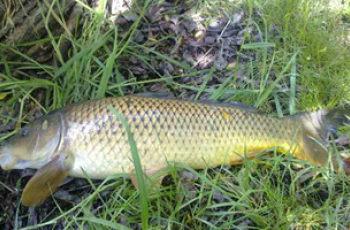 夏末手竿钓鲤鱼的选位钓法