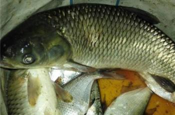 包食钓法:一种钓鲫鱼的科学手段