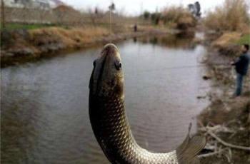 老钓手冬钓鲫鱼的饵料配方和垂钓经验