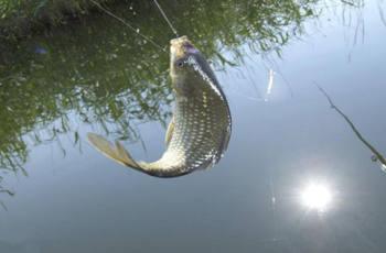 冬季钓鲫鱼,我们如何打窝才能更好的诱鱼