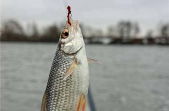 在秋季用红虫钓鱼,需要注意这几点