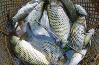 钓鲫鱼的商品饵配置,提升上鱼率
