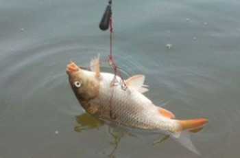 钓鲤鱼鲫鱼的窝料制作方法