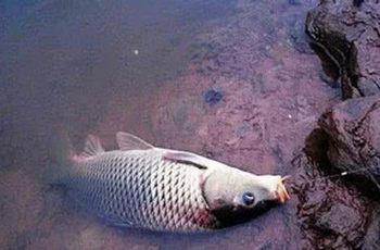 夏天钓鲫鱼,自制饵料的方法