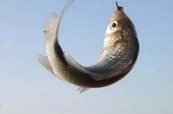 9款钓大鱼传统饵料配方