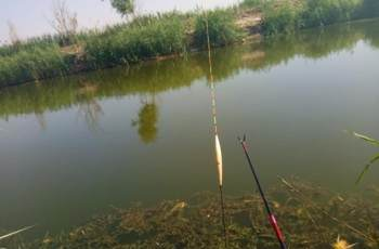 台钓中不同的鱼情,使用浮漂也是不同的