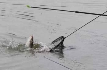 调漂的关键是根据鱼情和水情进行转换的
