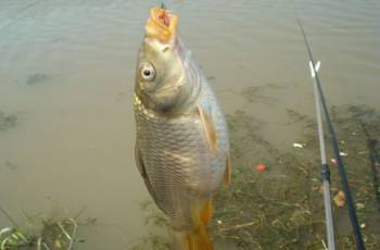 夏季草鱼的四种钓法