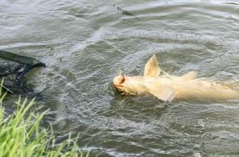 野钓鲤鱼,浮漂应该这样调