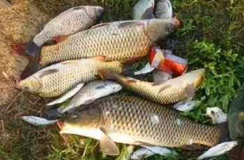 简单明了的无钩调漂方法,秋季钓大鱼就这么调漂