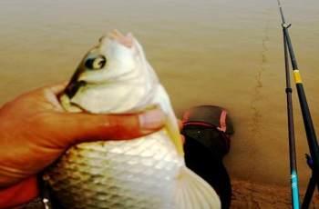 正钓生口鱼,要想钓得多,这些技巧要记住