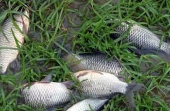 钓鱼空竿的原因和应对方法,只需4招