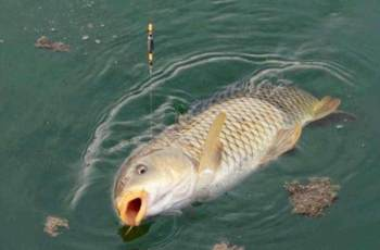 难怪夏季鲤鱼难钓,原来是钓位没选对
