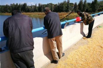 钓鱼人齐聚桥上,原因却是有人晒玉米