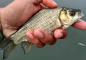 冬钓应对轻口鱼的小妙招