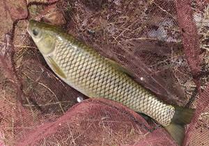 入冬之后钓草鱼的必知四要素