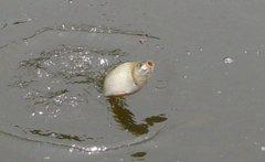 大众新手四季钓鱼寻找钓点的方法