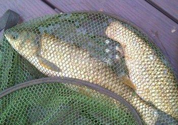 夏季湖库池塘浮钓草鱼经验总结