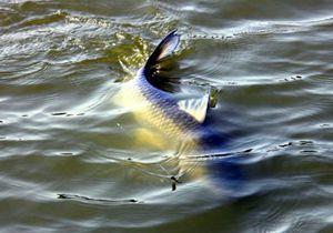 钓大鱼时跑鱼的原因与应对方法