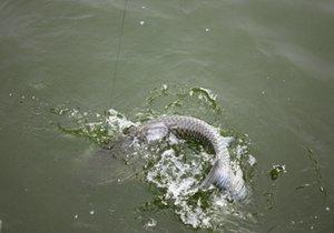 野外垂钓难钓大鱼的五个关键点