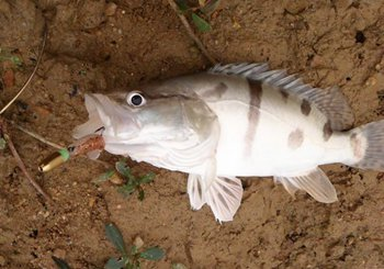 手竿与海竿钓鳜鱼的方法与注意事项