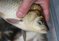 适合冬季钓鱼的诱鱼饵料与实战经验