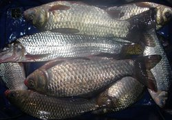 自然水域钓鱼补窝后鱼不开口怎么办