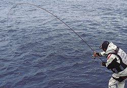 冬季使用矶竿钓组垂钓的技巧