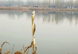 冬季用串钩远投钓鱼的技巧