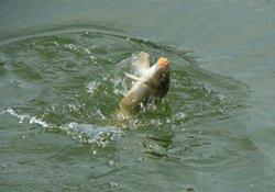 冬季根据天气气温选择钓法与搭配钓饵的技巧