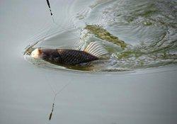 自然水域钓鱼追着鱼星作钓的技巧