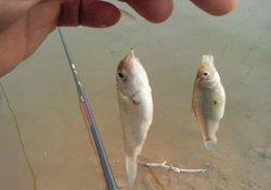 野钓调整钓组与饵料有效避开小杂鱼